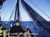 Purse seine fishing hauling in net