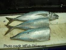 Processed and unprocessed fish