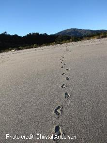 Footprints in the sand, West Coast, South Island